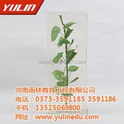 花冠(科)植物保色浸制标本,标本,雨林教育