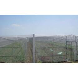 厂家直销的豆虫养殖网批发加工的网片加工的防虫网质量好