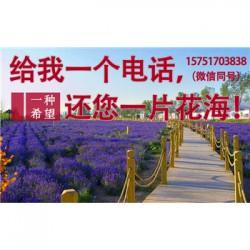 剪秋萝种子丨江苏春百宝种业