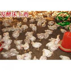 发酵床养鸡用什么牌子的菌种 多少钱一盒