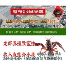 德兴小龙虾种苗价格《一亩投放多少小龙虾苗