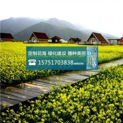 神香草种子丨江苏春百宝种业