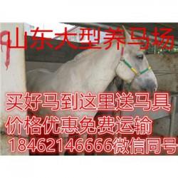 梧州纯血马那里的羊驼便宜