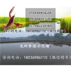 迁安小龙虾苗多少钱《稻田养虾技术视频》