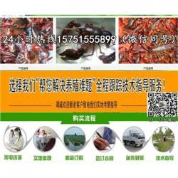 东台市龙虾种苗供应¥龙虾什么时候放苗