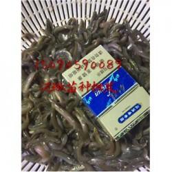 扬州江都泥鳅苗养殖全国送货保价收购