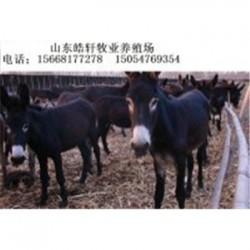 吉林300斤乌头驴德州驴肉驴驹多少钱