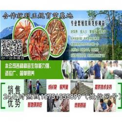 休宁县龙虾种苗供应¥龙虾养殖技术指导