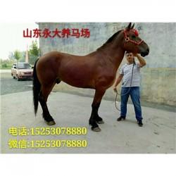 郴州市哪里有卖半血马的