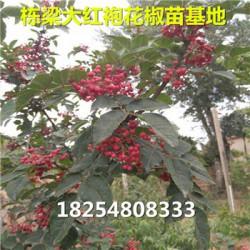 九江县基地桃树树苗价格