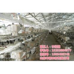 散养鸽子养殖技术_山东中鹏农牧_江苏鸽子养