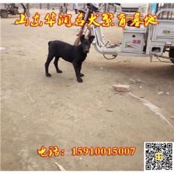 宁夏灵武有黑狼犬出售吗