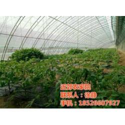 农家院、近郊农家院、武清农家院出售