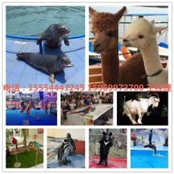 企鹅出租展览滨州市房地产有什么暖场活动