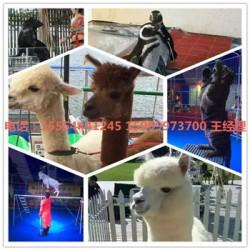 海狮表演出租西双版纳州可以互动表演的动物