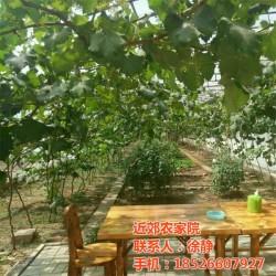 近郊农家院(图)|天津近郊农家院出售|农家院