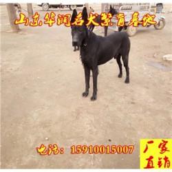 湖南湘乡有黑狼犬出售吗