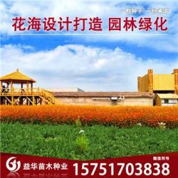 古代稀种子丨江苏春百宝种业