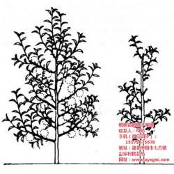 枣阳桃花岛(图),桃树苗种植说明,天津桃树苗