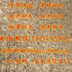 求购大叶女贞种子、快活林苗木、大叶女贞种